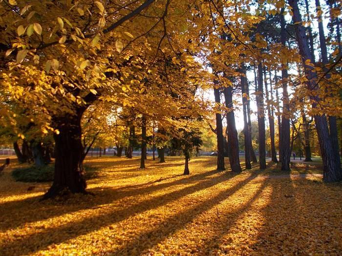 A soproni Erzsébet-kert fényei egy őszi séta közben.